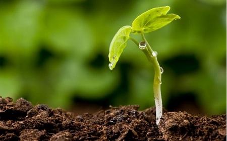 como-plantar-semillas