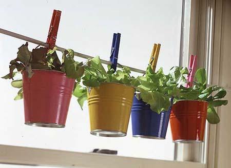 sembrar hierbas aromáticas