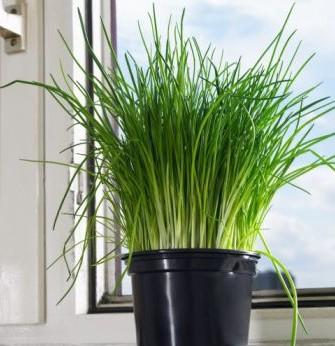 Huerto familiar hierbas arom ticas casas ecol gicas - Cultivo de hierbas aromaticas en casa ...