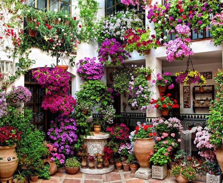 Los patios de c rdoba encantadoras fotos casas ecol gicas for Inmobiliarias cordoba