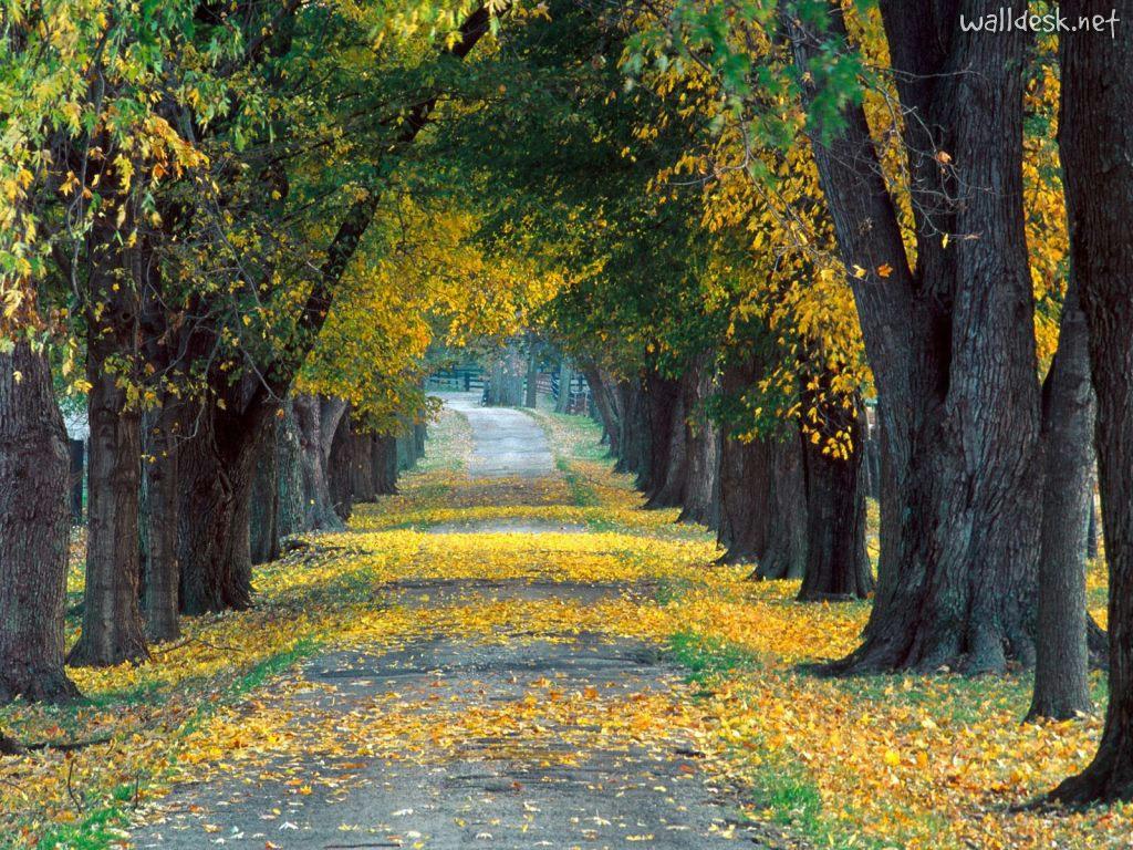Beneficios de los árboles para las ciudades