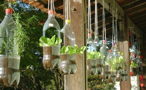 Huertos en botellas pl sticas an mate y empieza el tuyo for Plantaciones verticales