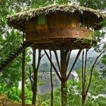 Casa de madera en el arbol con techo vegetal