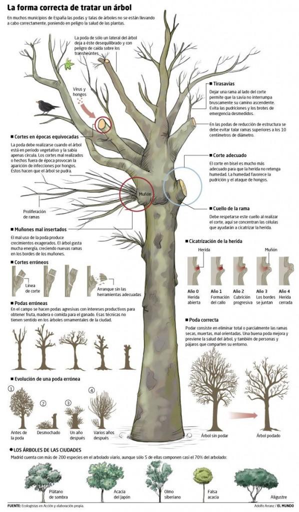 cómo podar los árboles