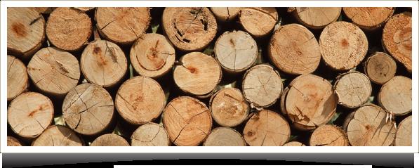 la madera absorbe CO2 y libera oxigeno, purifica el aire