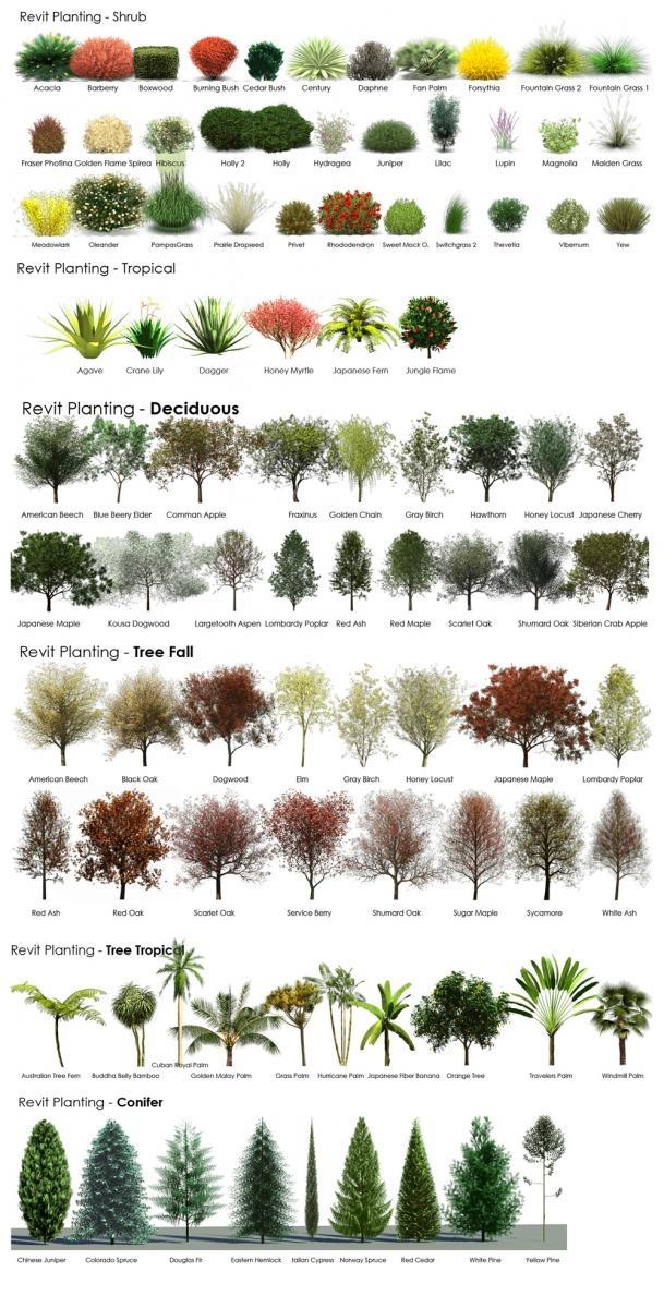 Plantas y rboles para el jard n casas ecol gicas for Arboles de flores para jardin