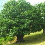 Qué árboles sembrar en casa