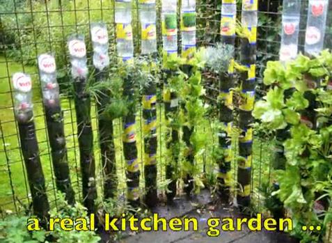 un huerto o jardn con botellas de plstico es una buena iniciativa para reciclar y a su vez sembrar tus propios alimentos
