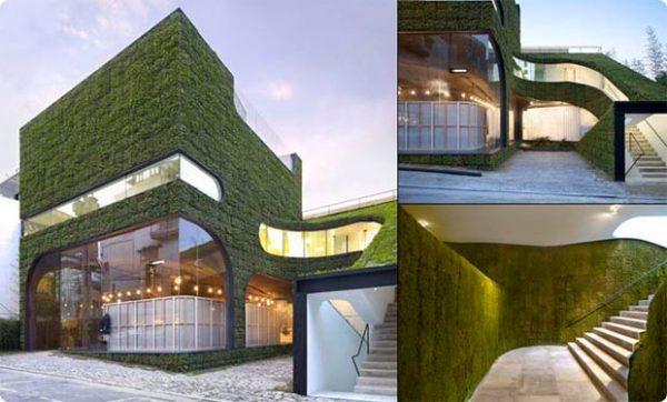 Jardines verticales, una práctica con múltiples ventajas