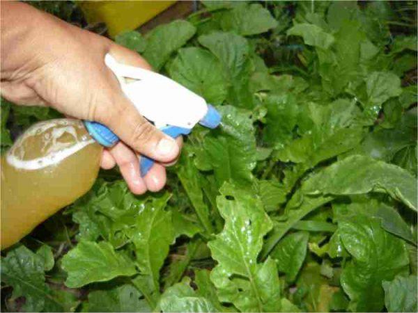 insecticidas naturales caseros