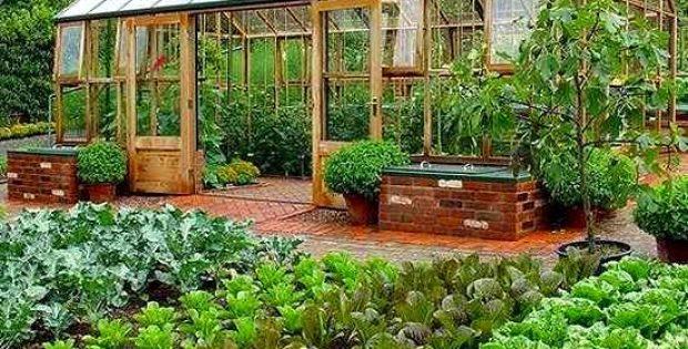 plantar en un invernadero